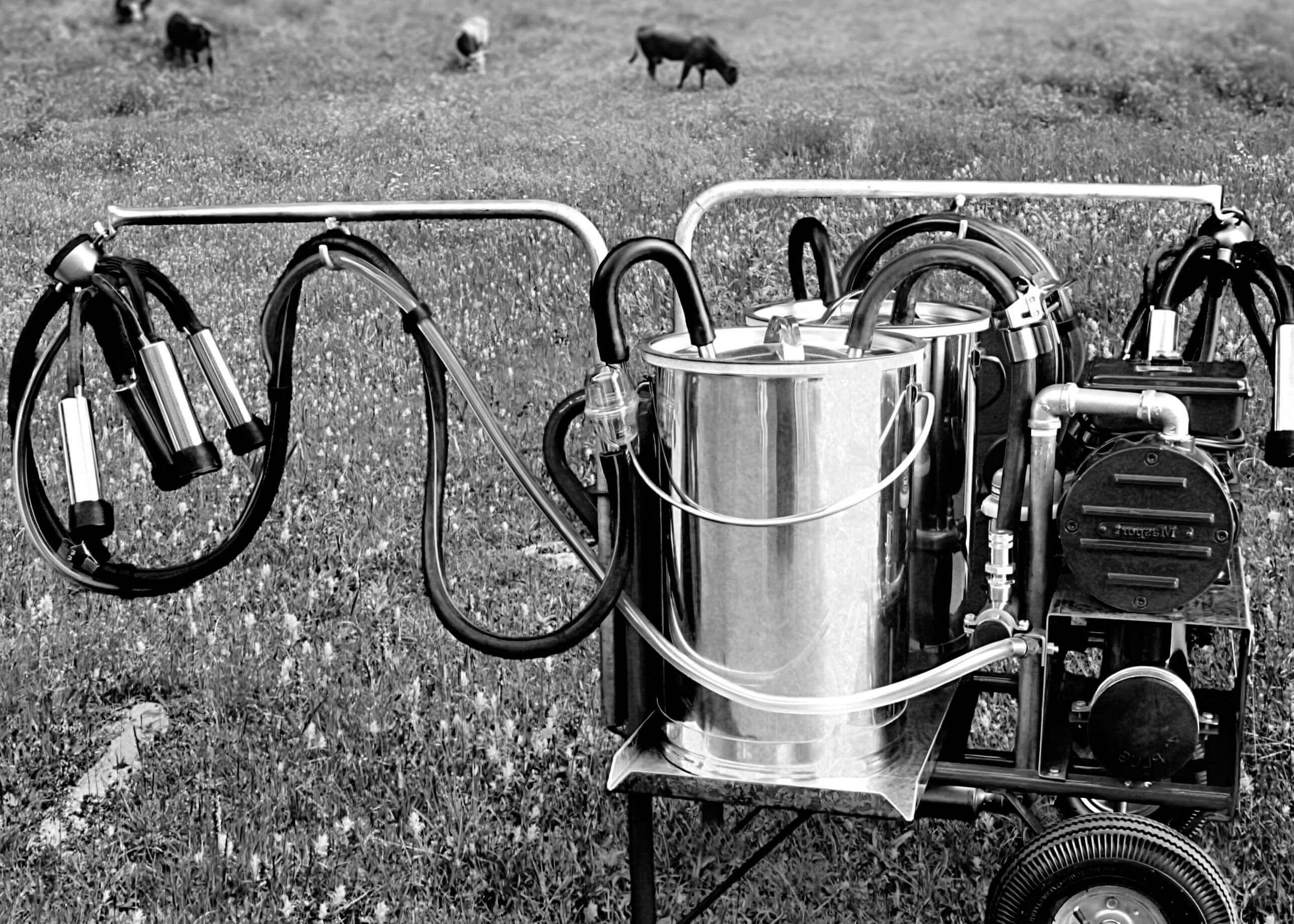 Read Industrial portable milking system