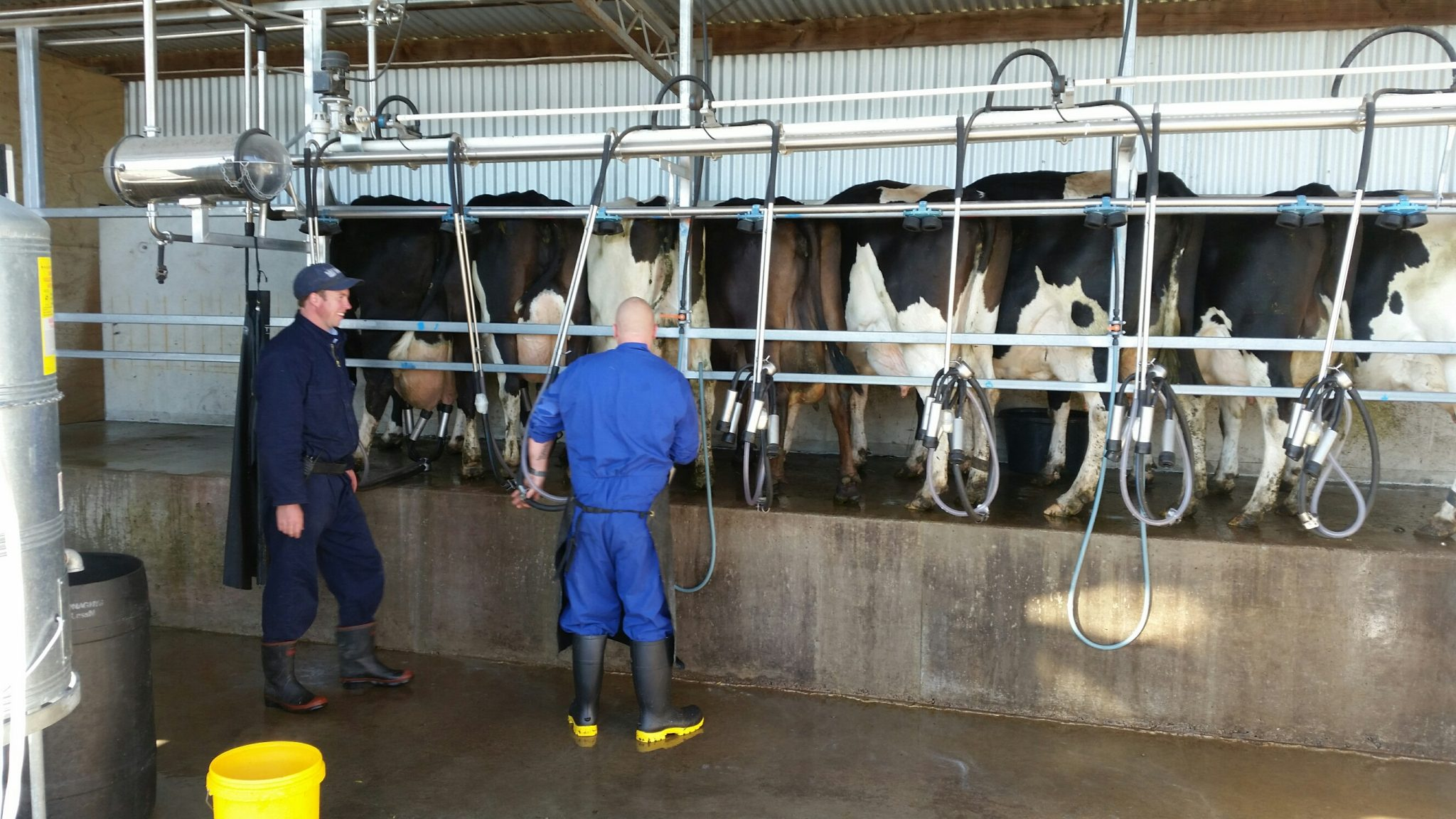 Read Milking System Christchurch Men's Prison