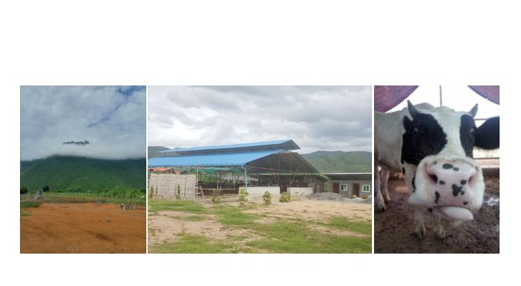 Natural Mountain Dairy Farm